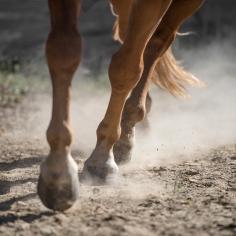 HorseScapes5-2015-51
