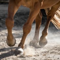 HorseScapes5-2015-52