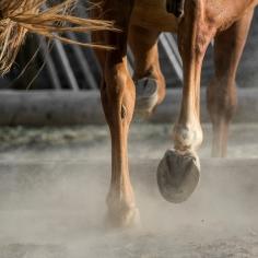 HorseScapes5-2015-6
