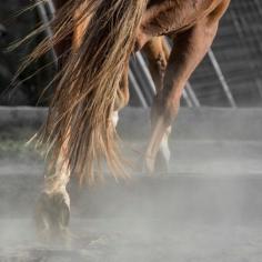 HorseScapes5-2015-7