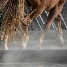 HorseScapes5-2015-8
