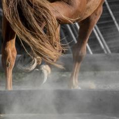HorseScapes5-2015-9