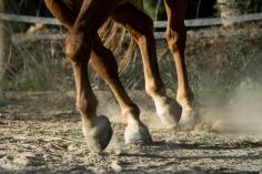 HorseScapes5-2015
