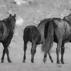 HorseScapes-4