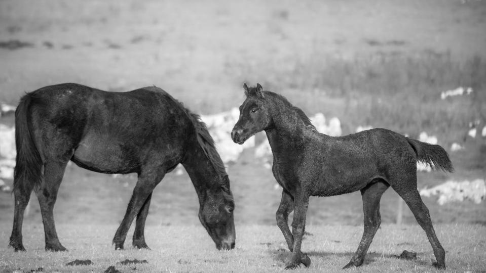 HorseScapes-5