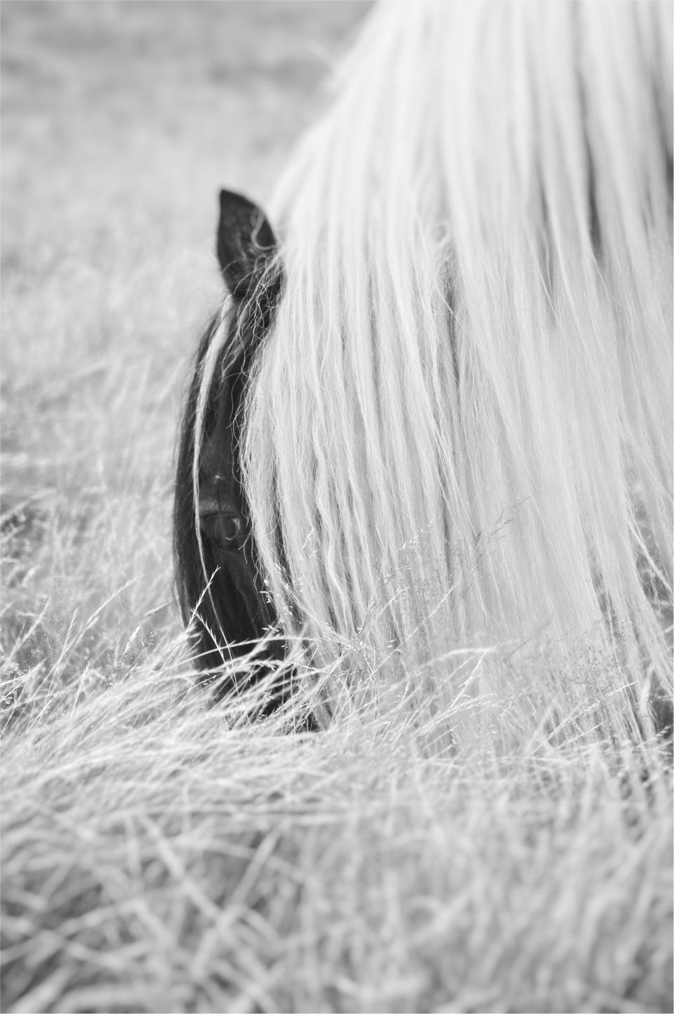 horsescapes1