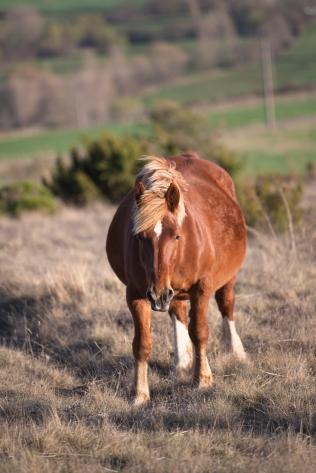 Horses10 copy